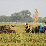 Pembangunan Pedesaan Berikan Dampak Positif